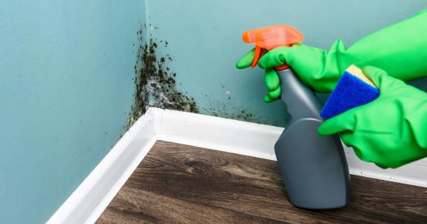 Home Invasion: Mould in your house